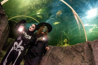 SeaQuarium Spooky Spectacular